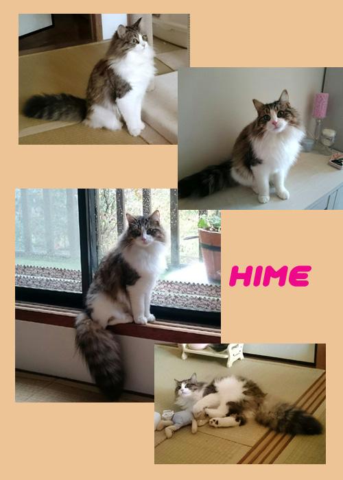 hime2.jpg