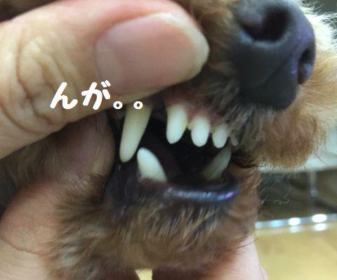 最期の乳歯