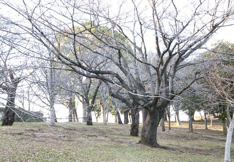 保土ヶ谷公園