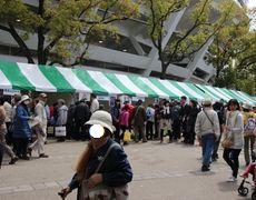 横浜公園2015