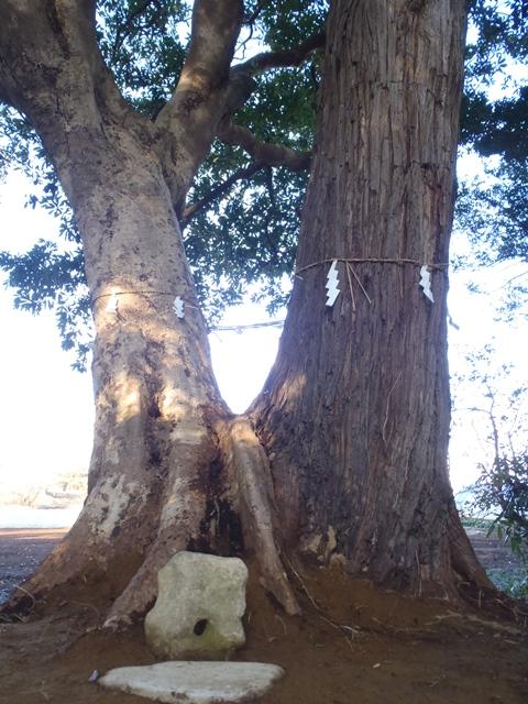 ①結びの樹