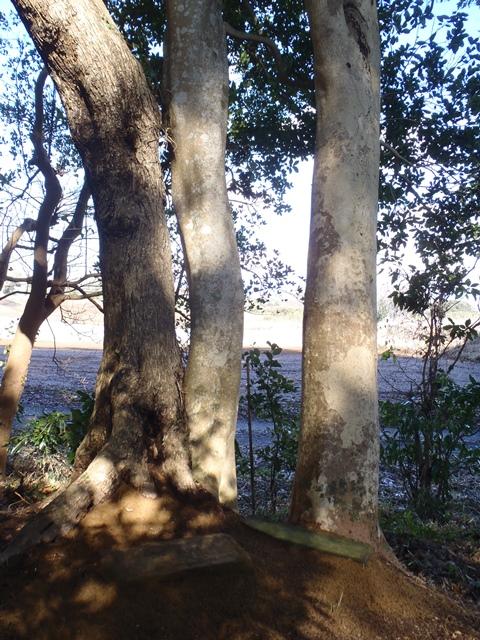 ②兄弟姉妹の樹