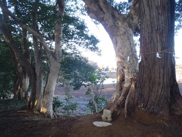 ③結びの樹・兄弟姉妹の樹樹の全景