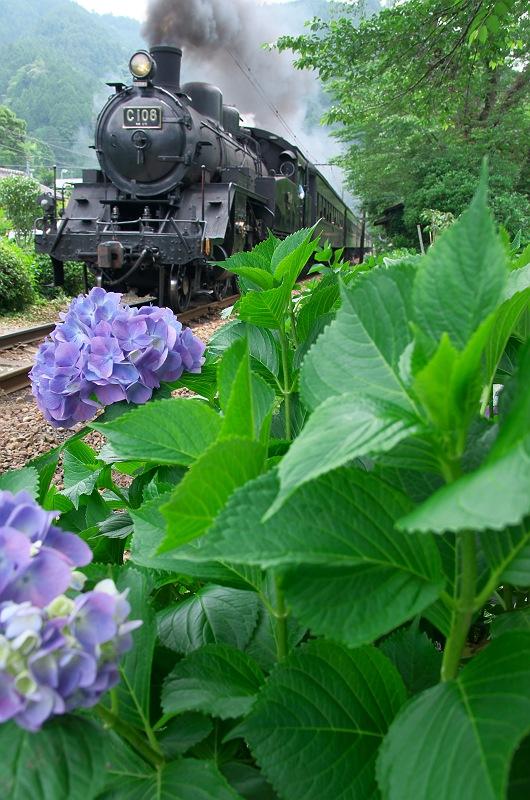 紫陽花咲く大井川鐵道