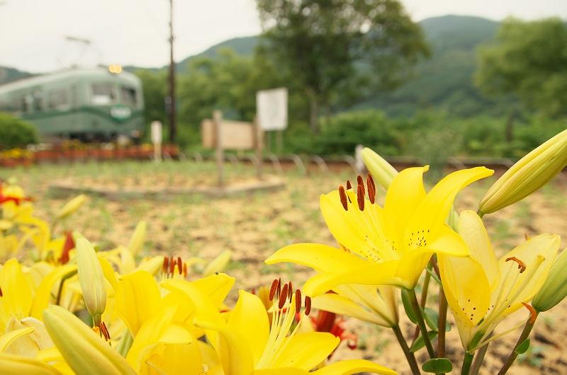 ゆりの咲く駅