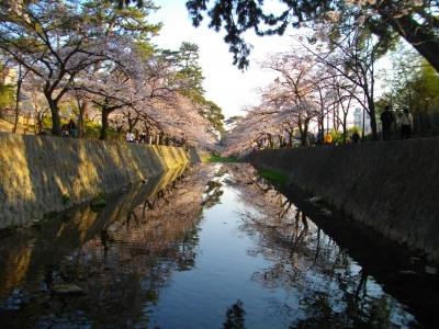 川に映る桜
