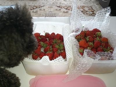 母からイチゴ