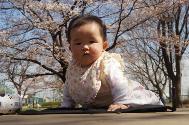 桜とビールと赤ちゃん