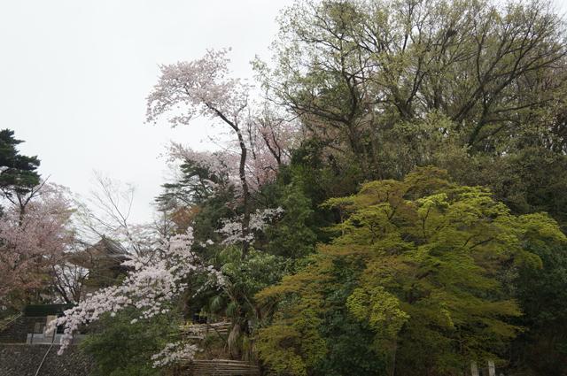 白馬童子を撮ったという山に春が来た 高幡の山