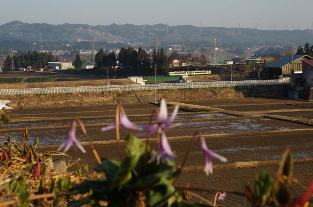飯山線羽根川鉄橋を行くキハと春