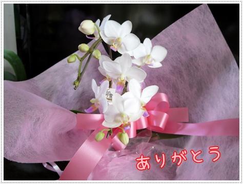 IMG_2913.jpg