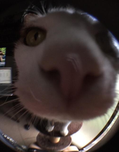 魚眼レンズで猫さんを撮影