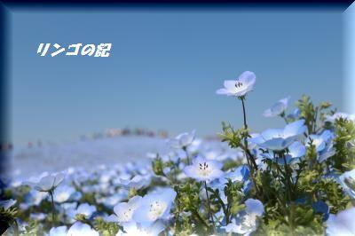 青の世界④