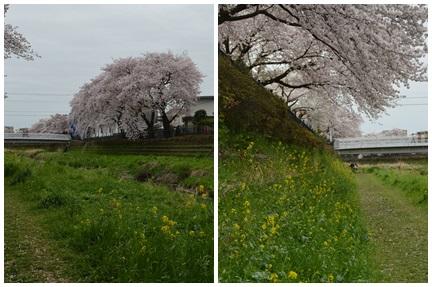 2015-04-04_116.jpg