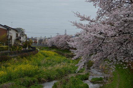 2015-04-04_132.jpg