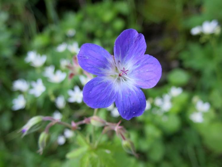 リギの花2150624