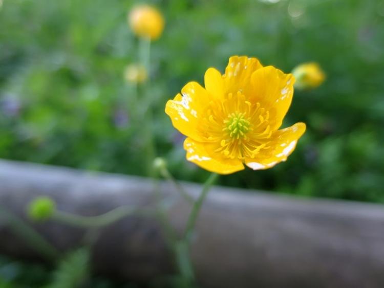 リギの花4150624