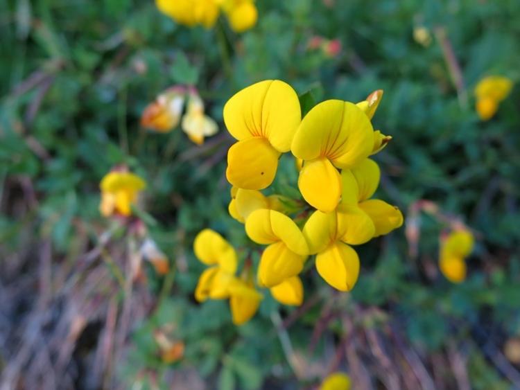 リギの花6150624