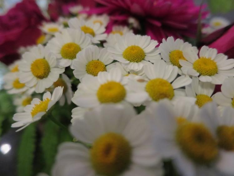 リギの花8150624