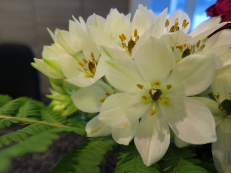 リギの花9150624