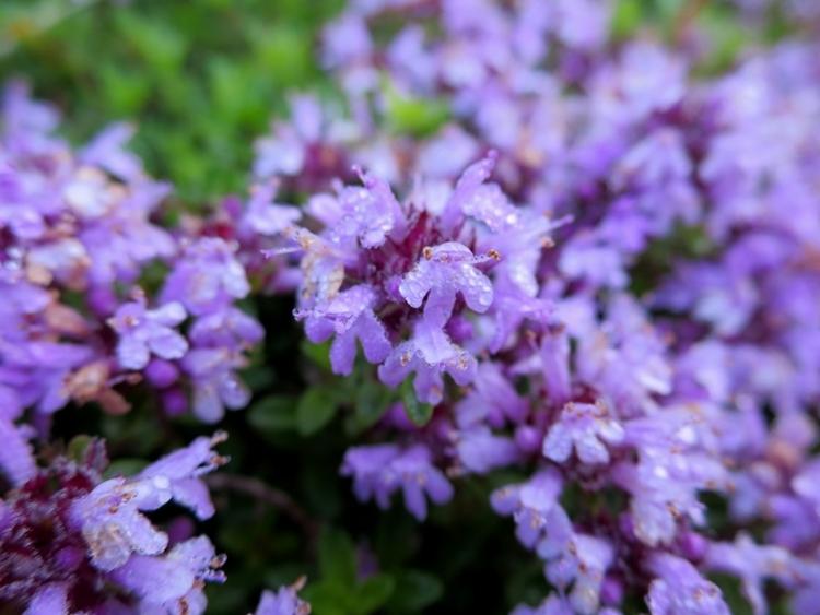 リギの花1212150625