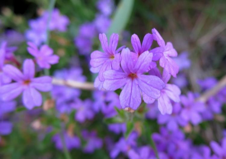 リギの花13150625