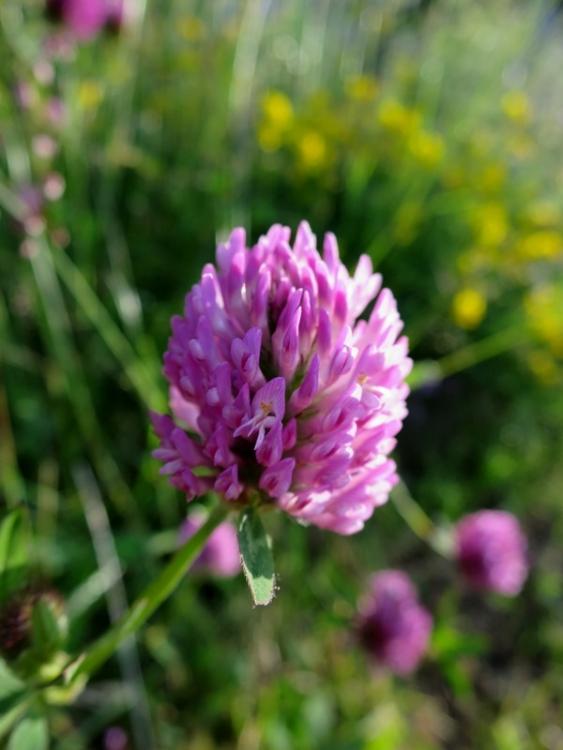 リギの花14150625