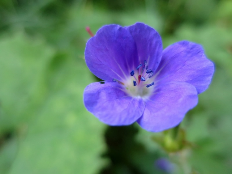 リギの花16150625