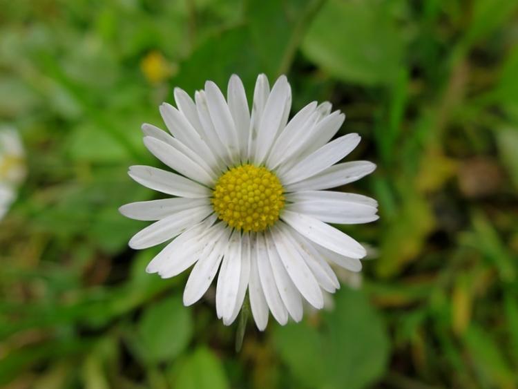 リギの花18150625