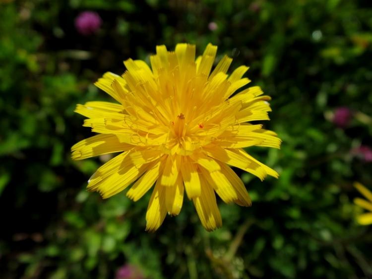 リギの花22150625