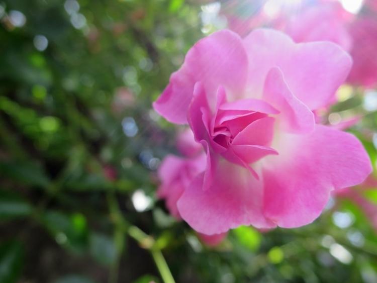 リギの花25150625