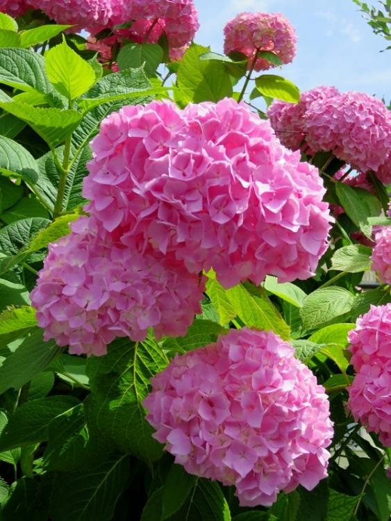 リギの花26150625