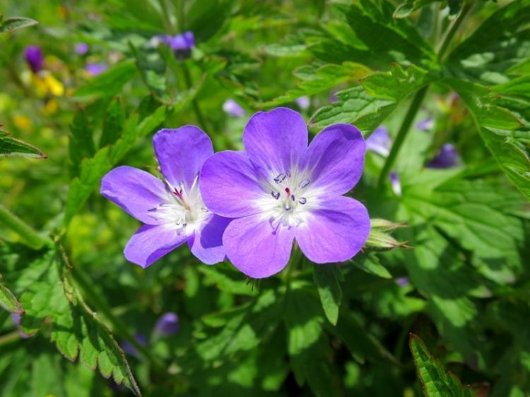 花の谷1150629