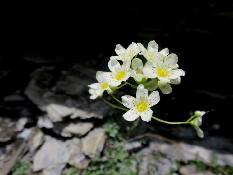 花の谷4150629