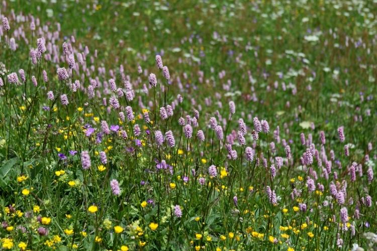 花の谷8150629