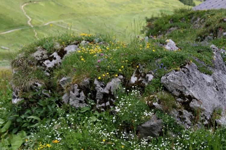 花の谷10150629