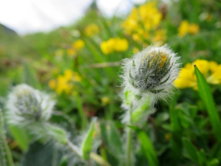 花の谷12150629