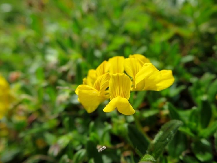 花の谷13150629