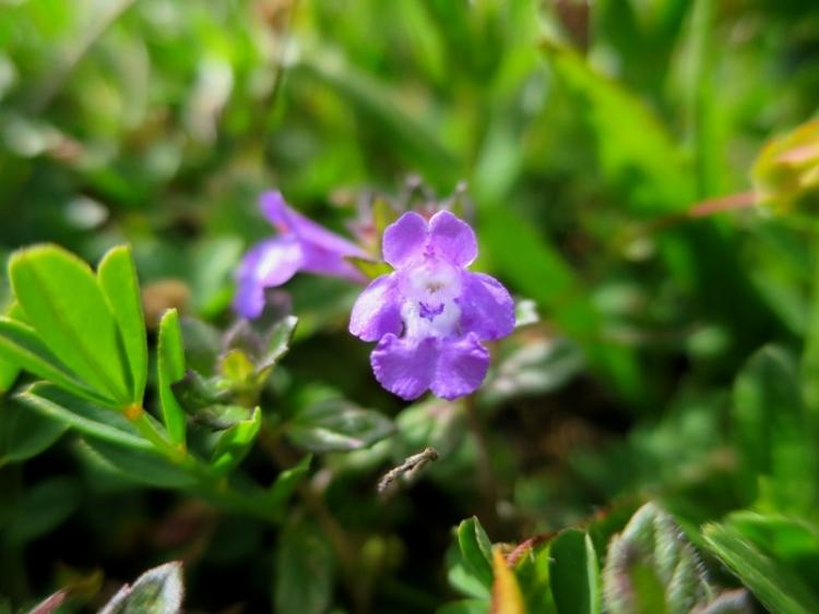 花の谷14150629