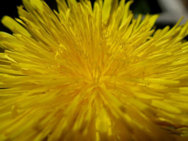 花の谷15150629