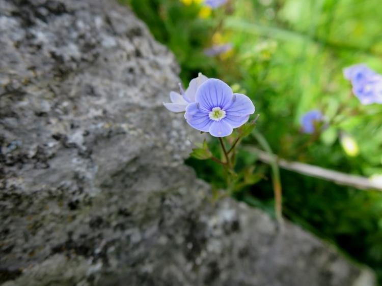 花の谷16150629
