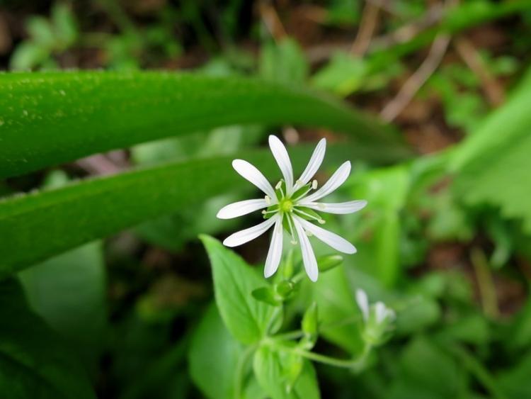 花の谷19150629