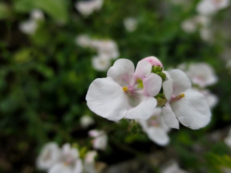 花の谷20150629
