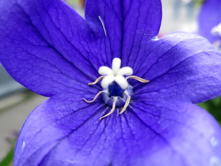花の谷21150629
