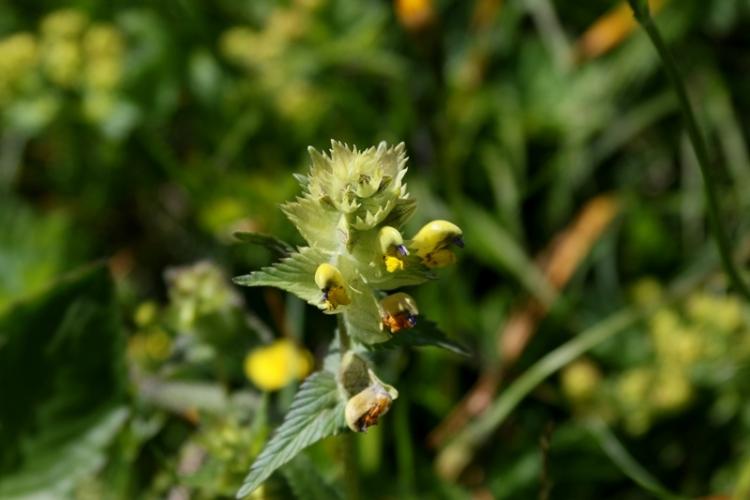 花の谷22150629