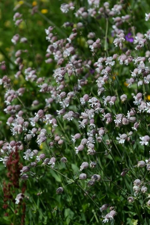 花の谷23150629