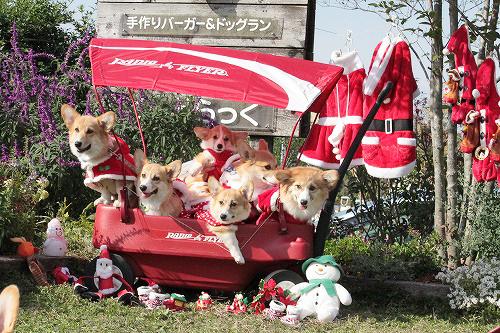 チームあずきでクリスマス