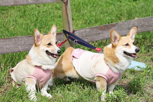 カンナちゃん&クレアちゃん