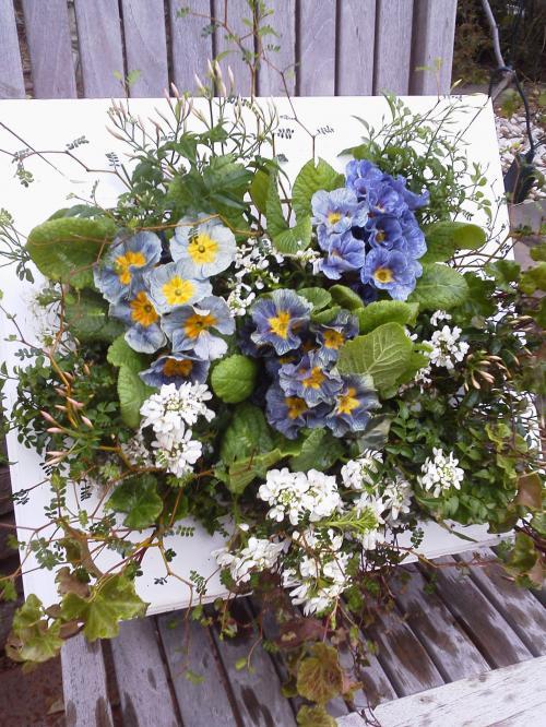 花はなフレーム プリムラ