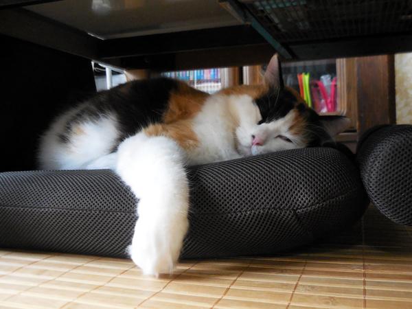 腹筋座椅子で爆睡